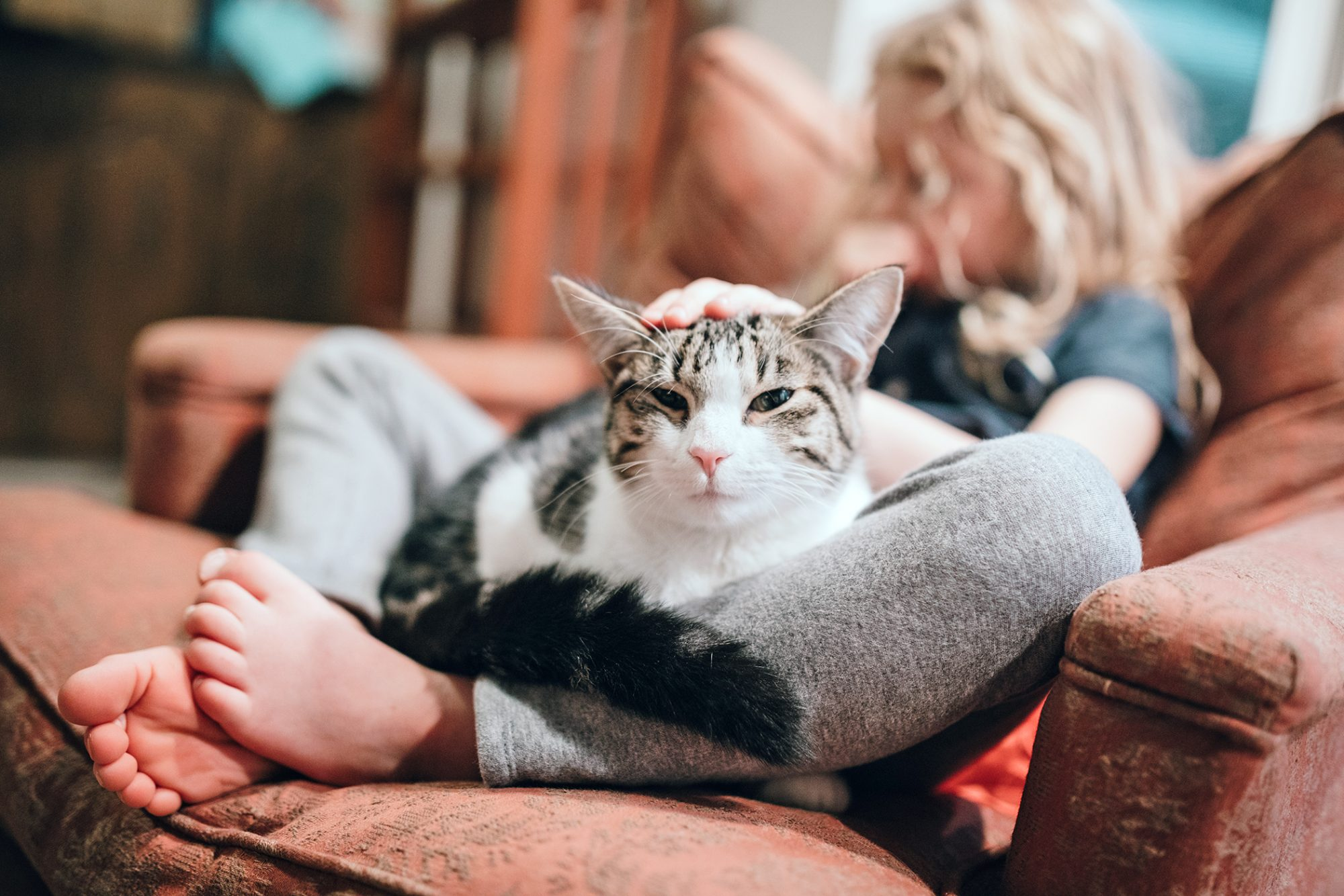 cat with liver disease being pet while sitting in between a child's legs