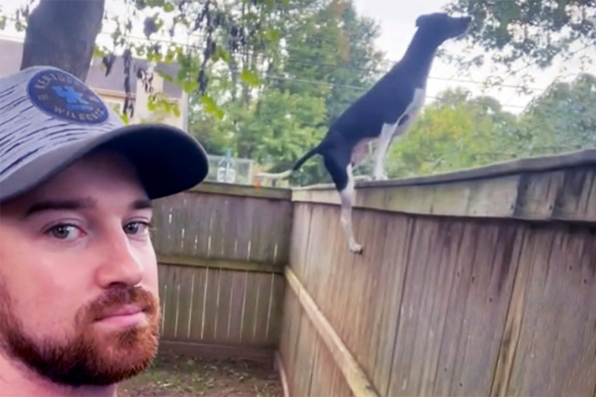 jumping dog scaling tall fence