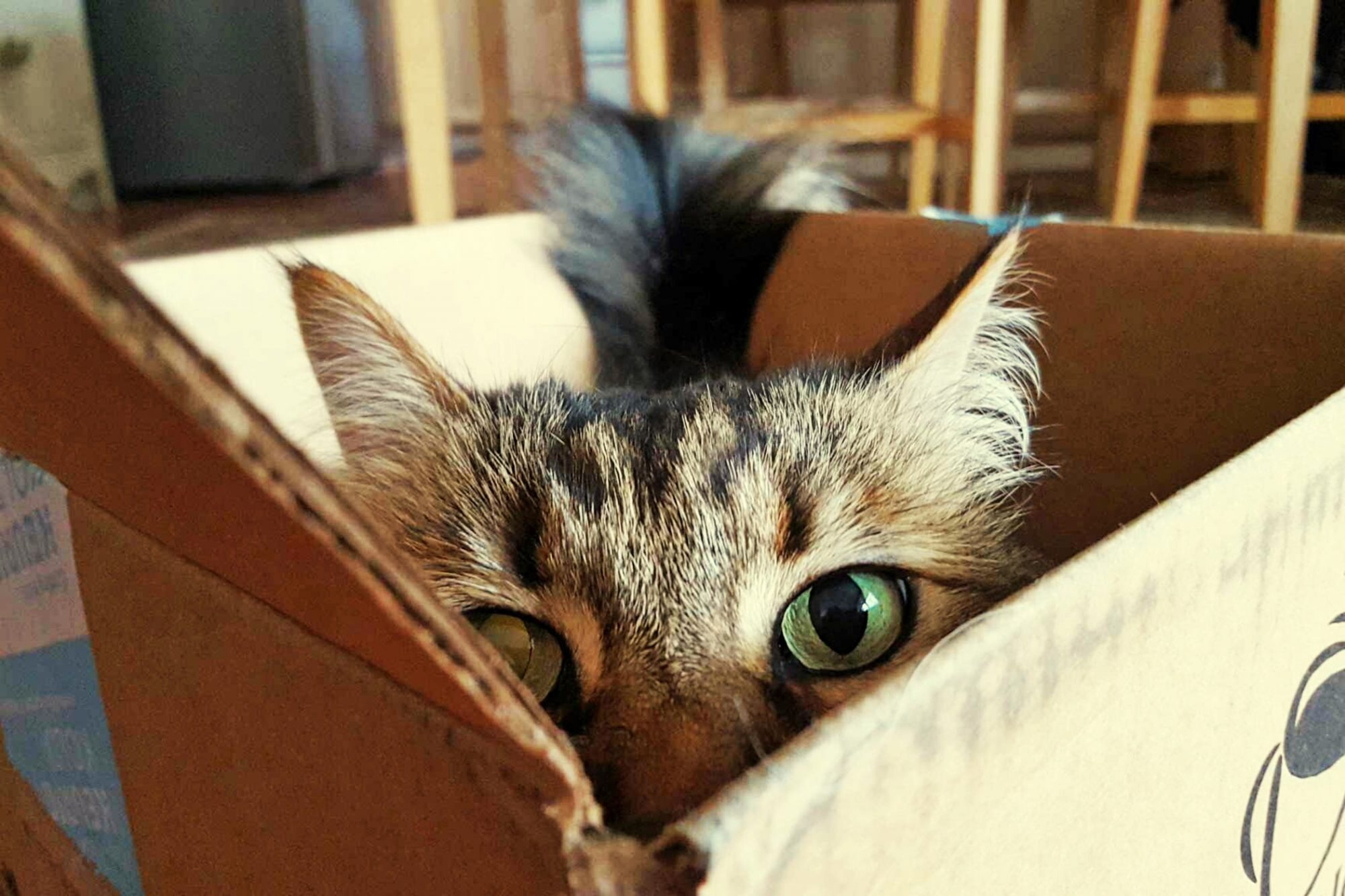 cat peering out of a cardboard box