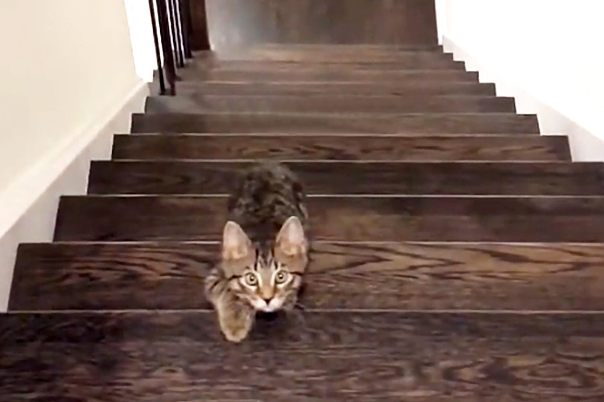 a cat is walking up the stairs playing red light/ green light with the owner