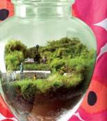 terrarium travel