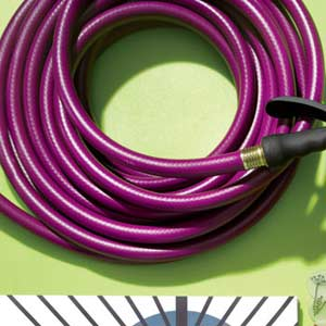 Purple Hose