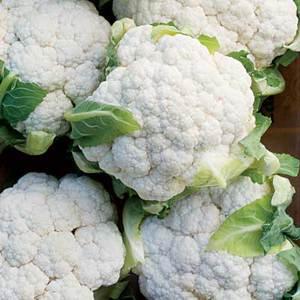Shaved Cauliflower Gratin