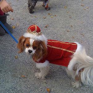 Doggy Royalty