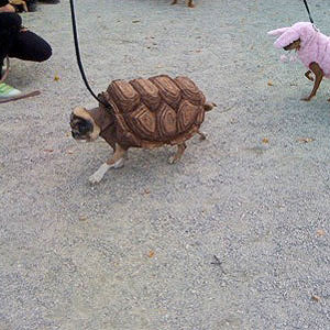 Turtle-Pup