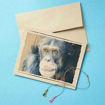 Chimpanzee Sanctuary Northwest Gift