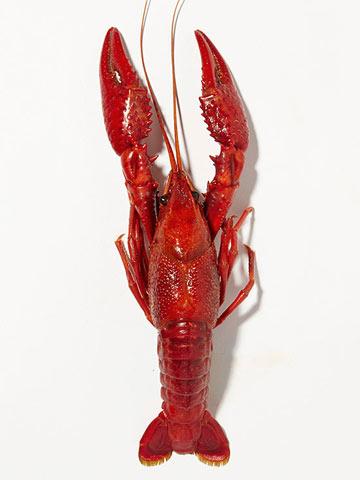 Louisiana -- Crawfish