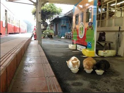 Goi Station Cats
