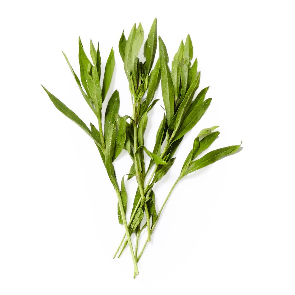 tarragon herb plant