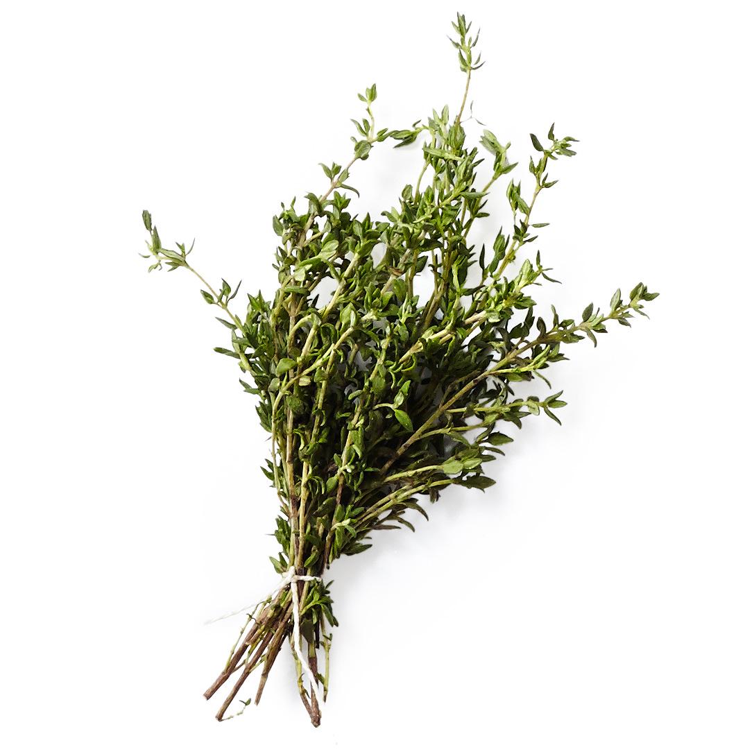 thyme herb plant