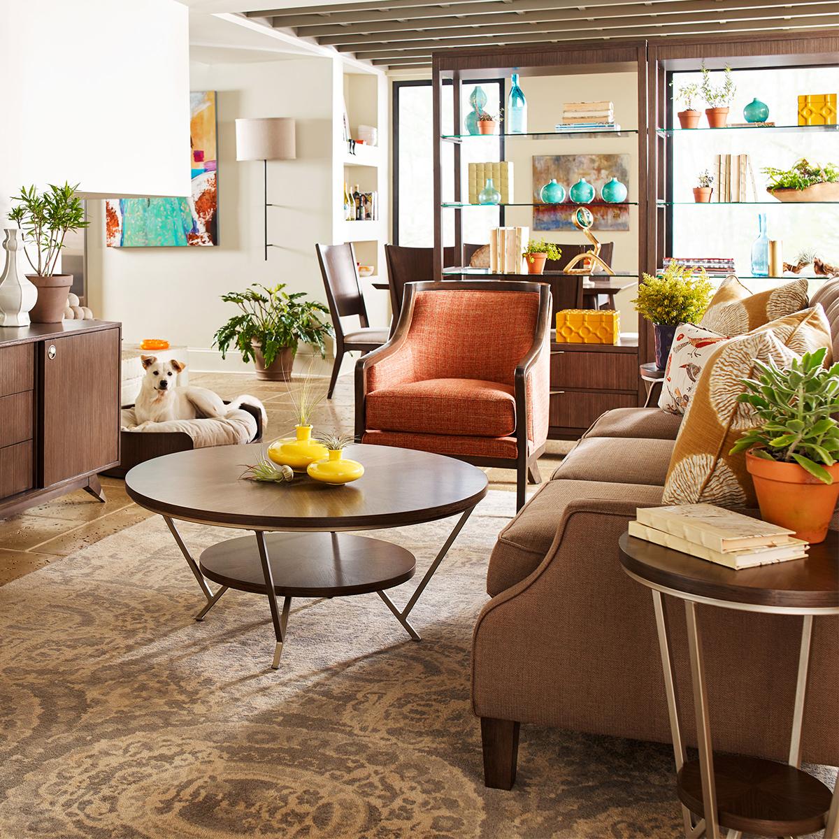 living room furniture dog