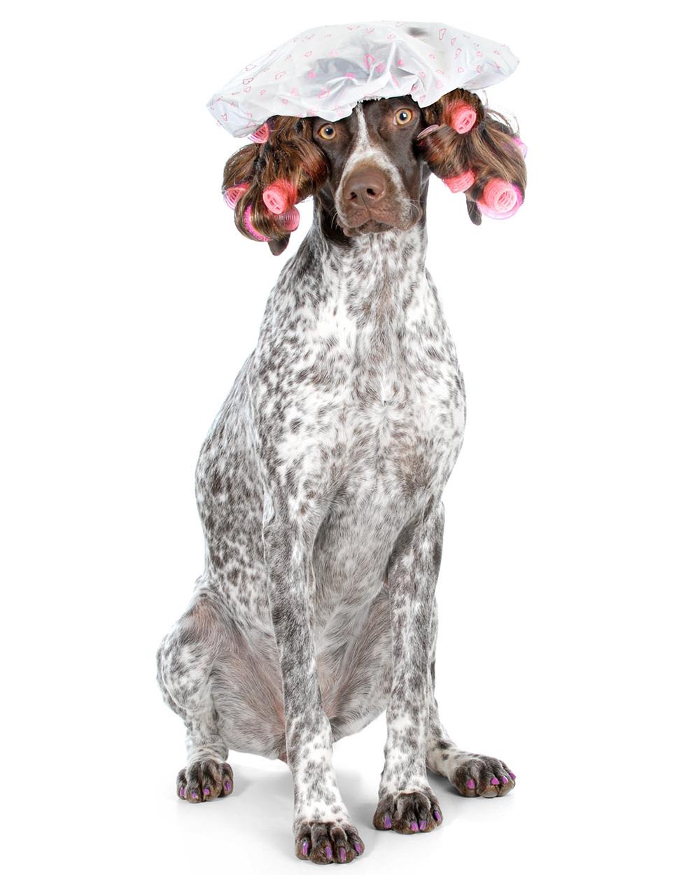 groomed dog wearing bathing cap