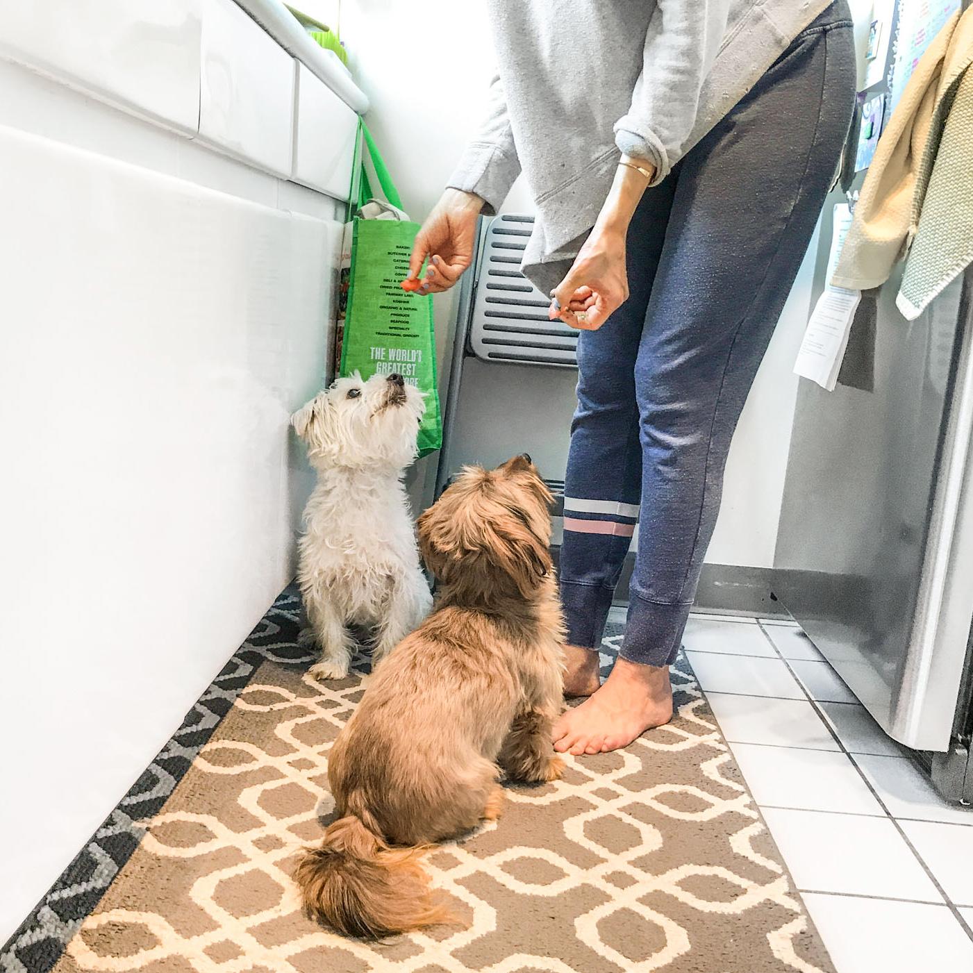 foster feeding dogs