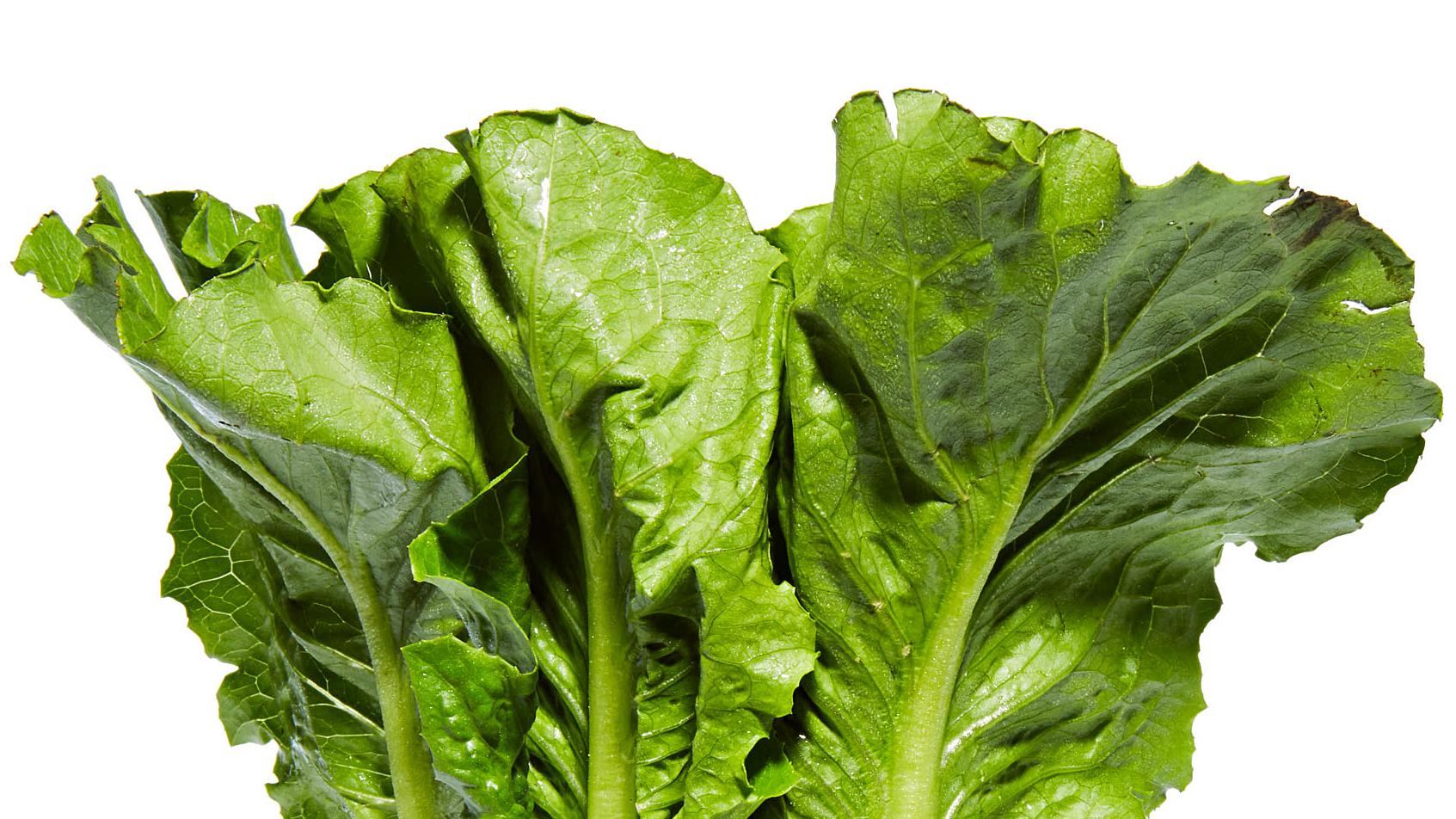 Head of Romaine Lettuce horizontal crop
