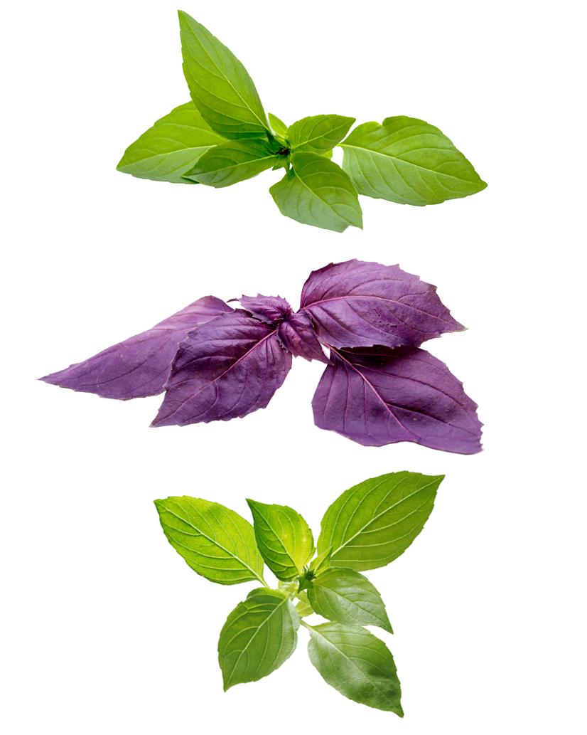lemon thai and purple basil