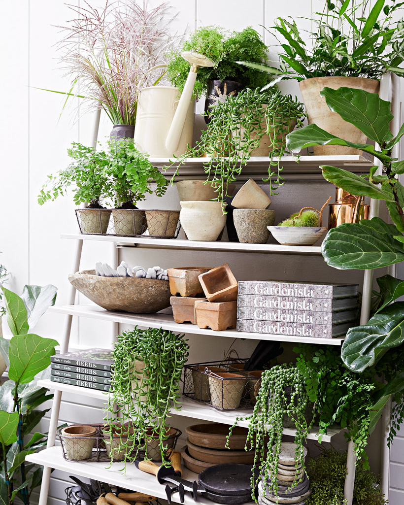 plants on stand