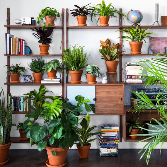 bloomscape-lifestyle-plant-shelfie-0318_sq