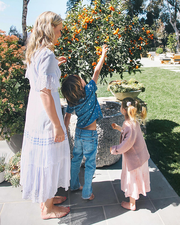brooks grabs kumquat from tree