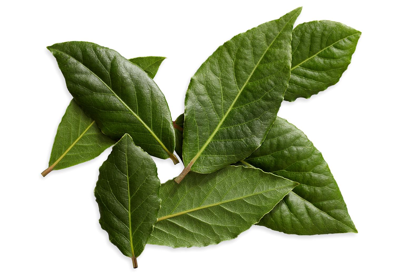 fresh bay leaves