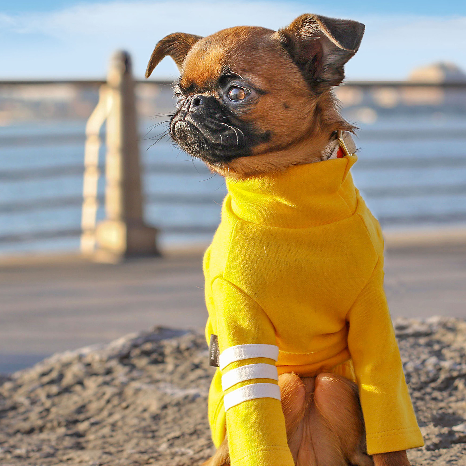 sprout wearing yellow sweater at beach