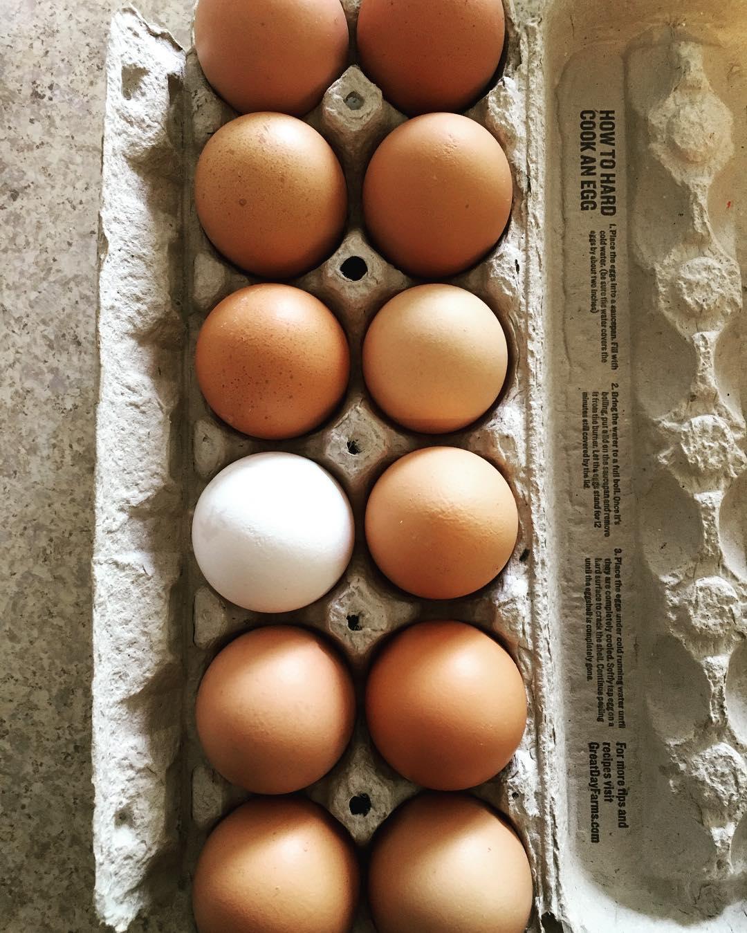 egg-carton-eggs