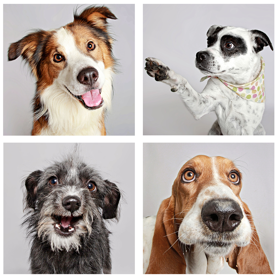 Collage of four different dogs