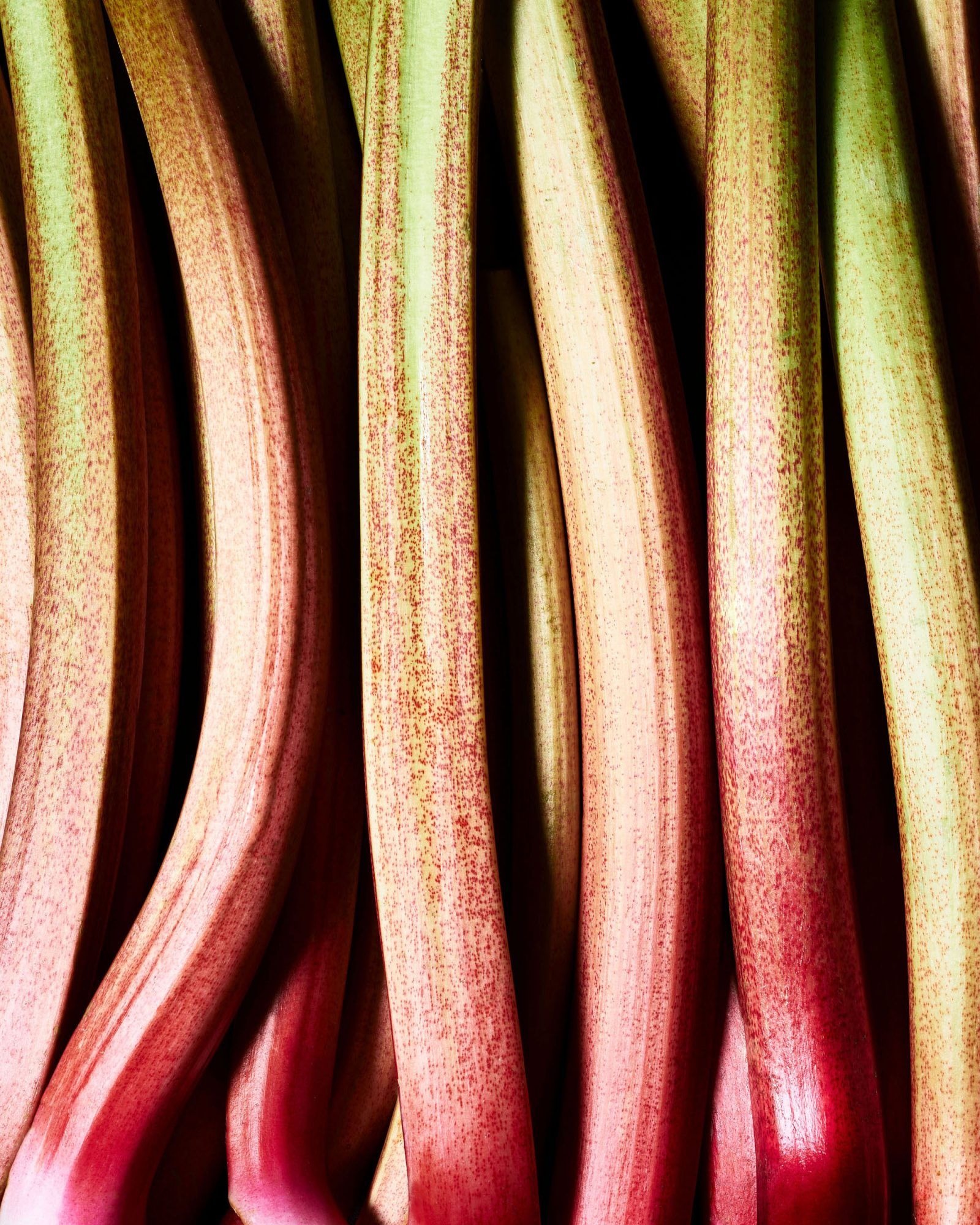 rhubarb sticks