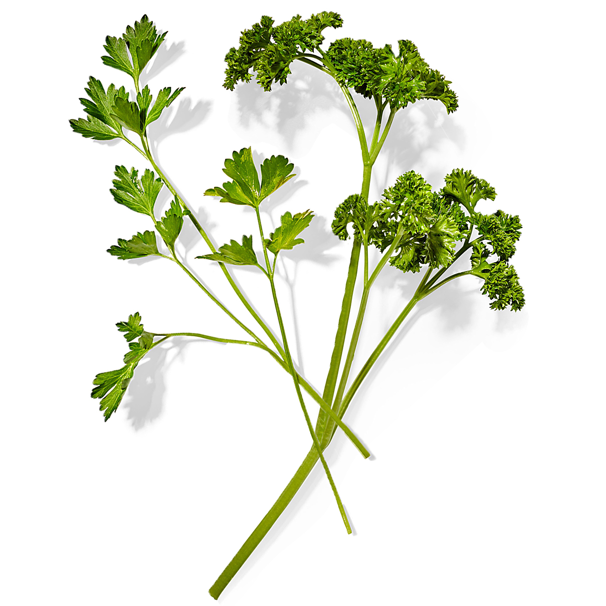 flat-leaf and curly parsley sprigs