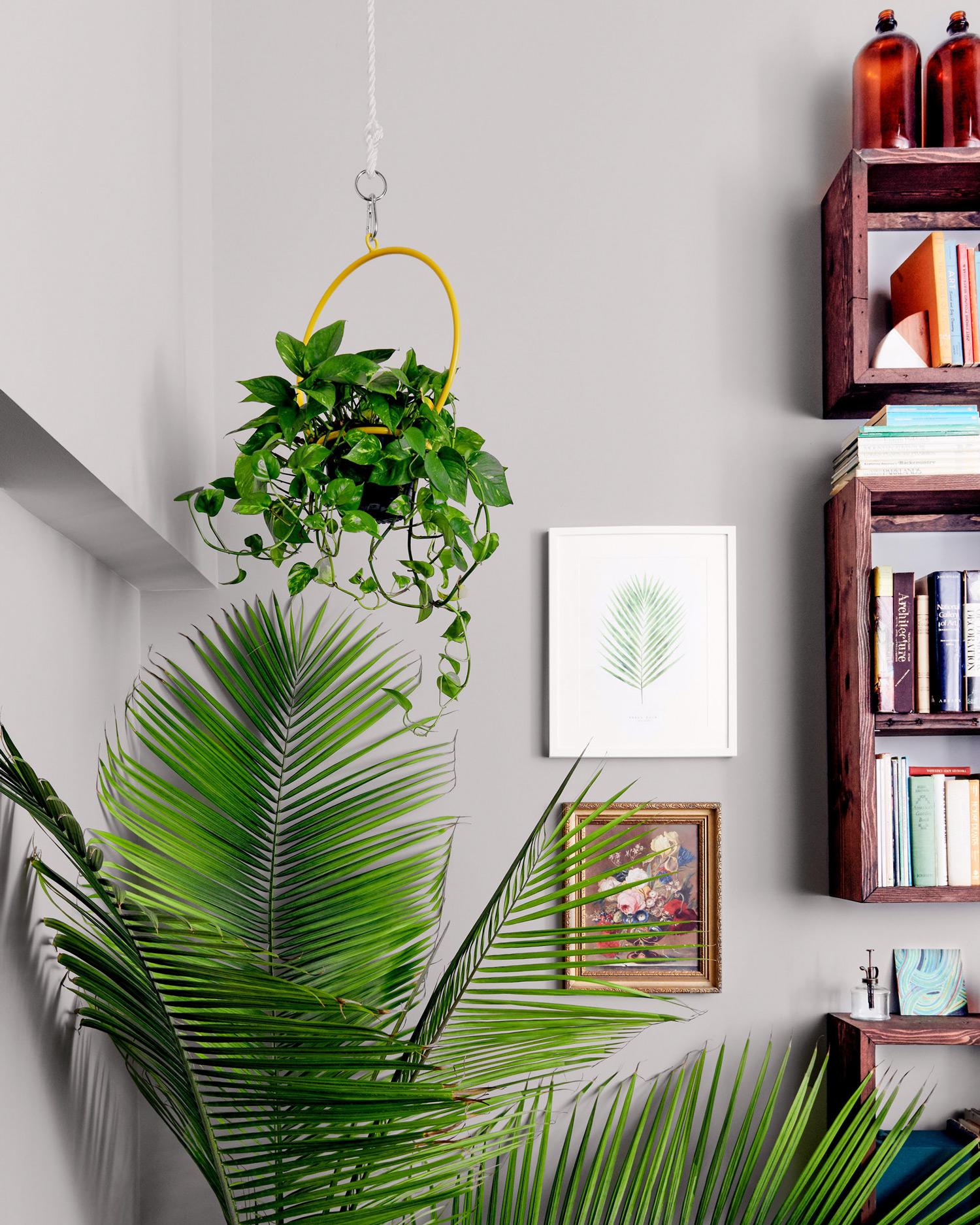 hanging planter above palm plant