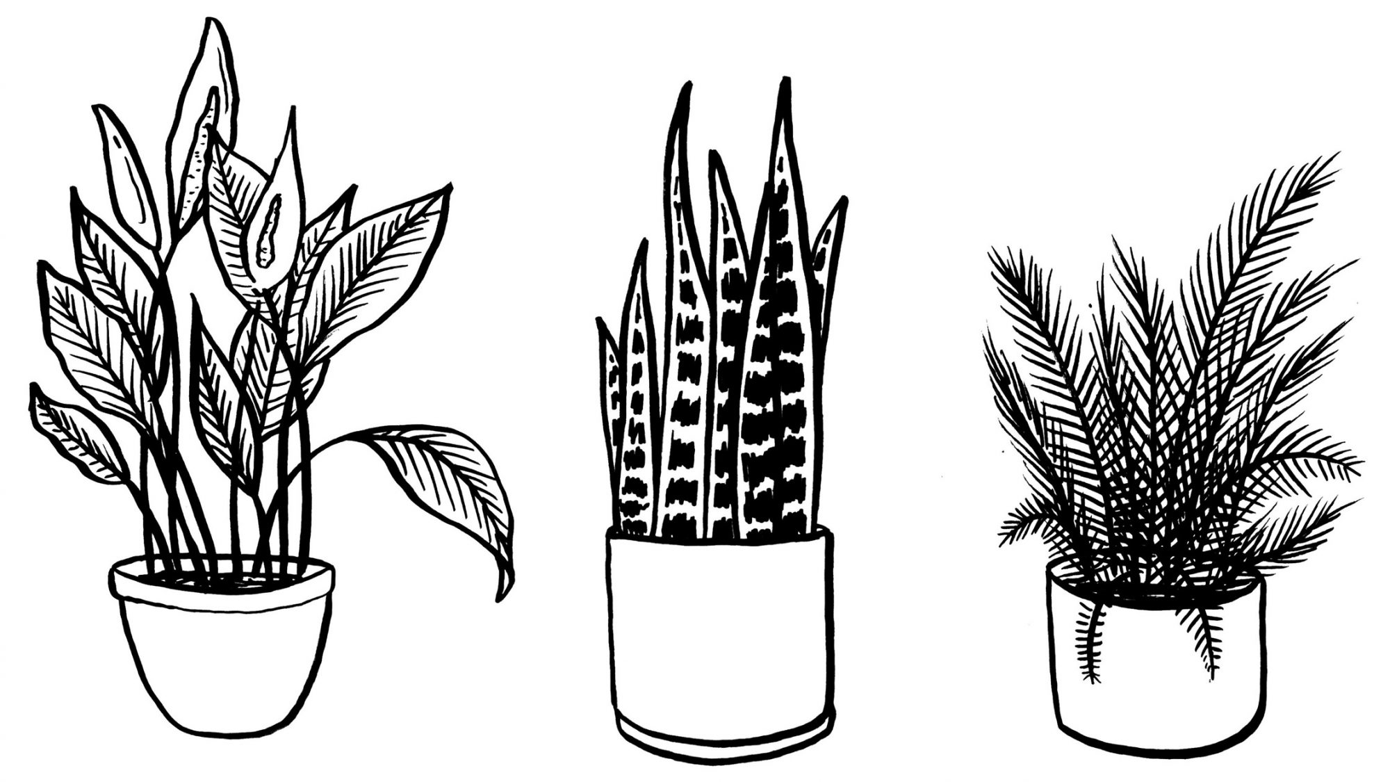 three illustrations of plants snake peace lilly and fern