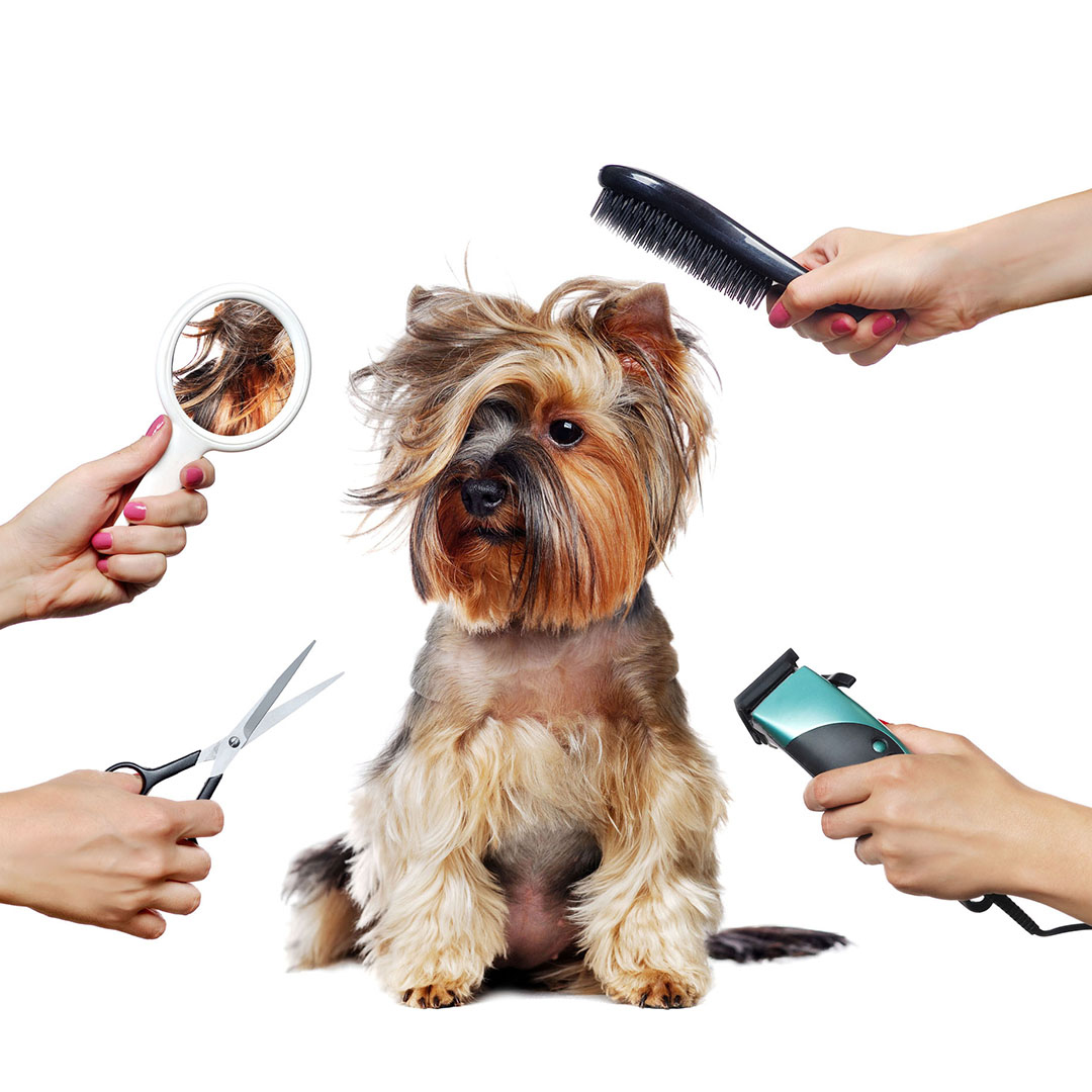 dog grooming with multiple hands and tools
