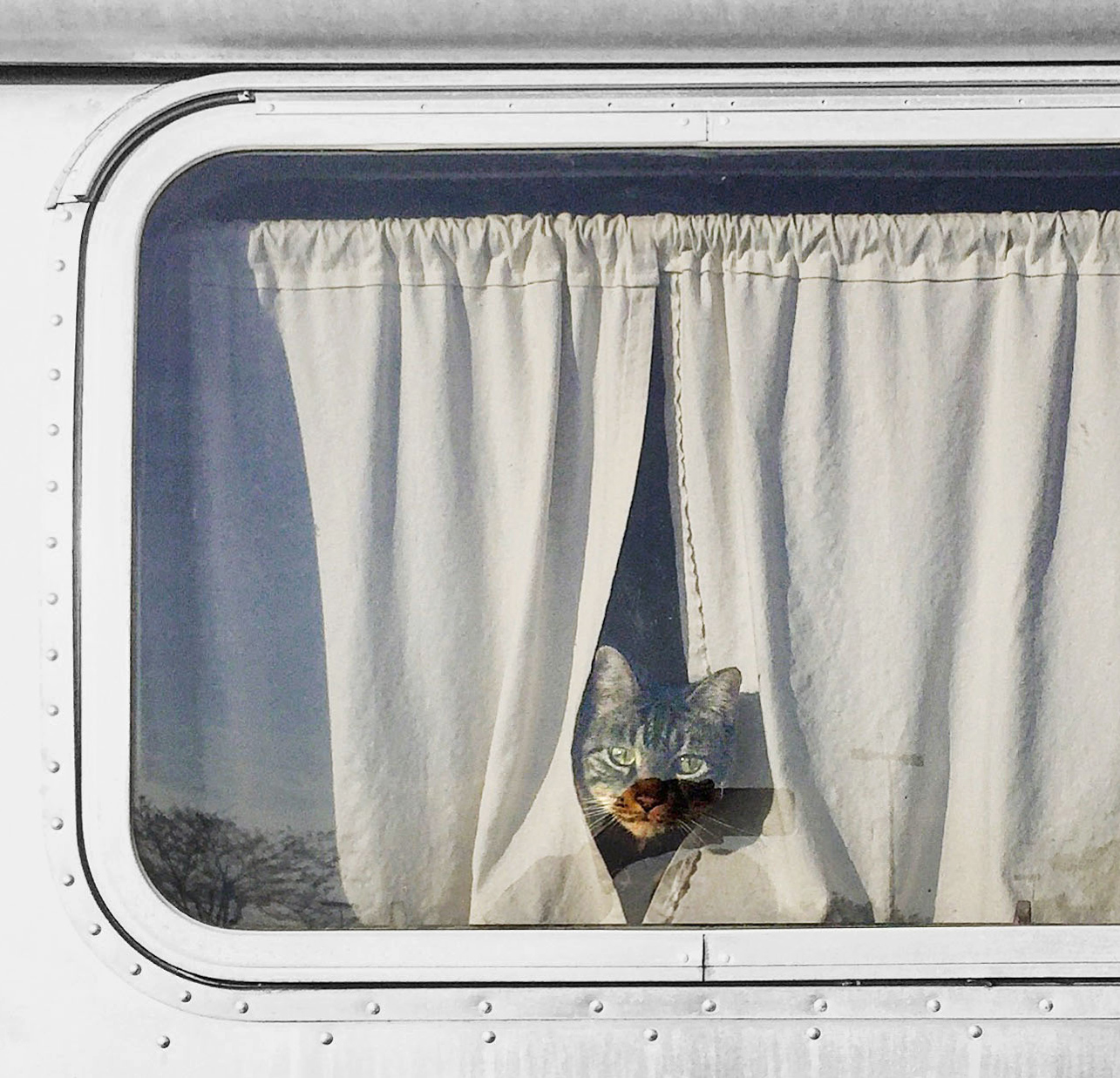 cat peeking through curtains in airstream