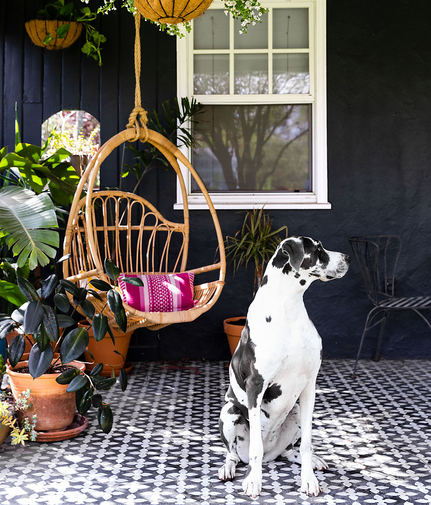 dog and swing on back porch