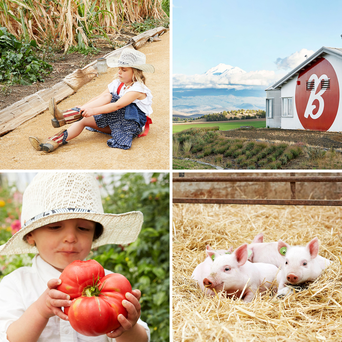 viola putting on boots, theo holding a tomato, farm, piglets