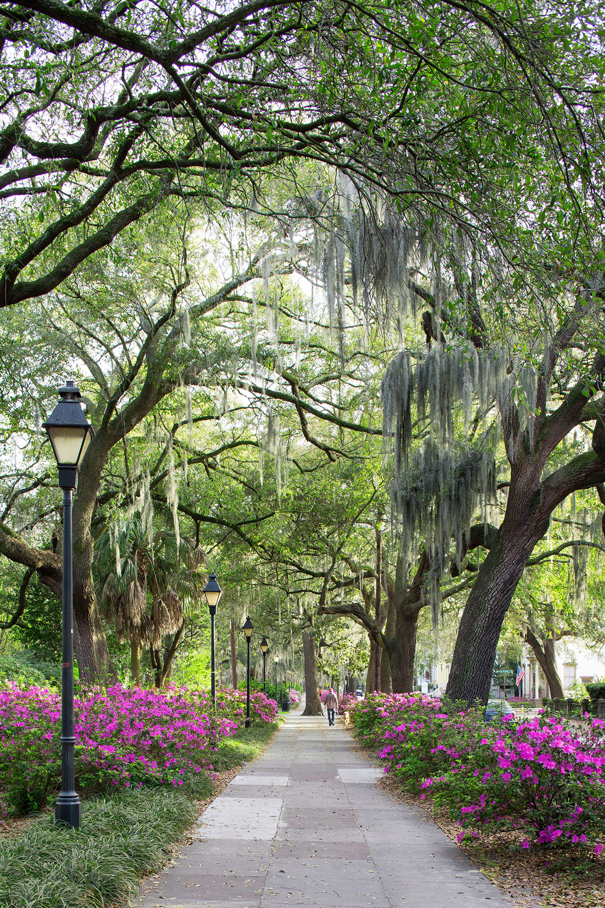 savannah walkway with trees and flowers