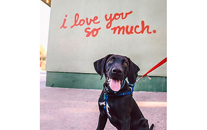 dog in front of i love you so much mural