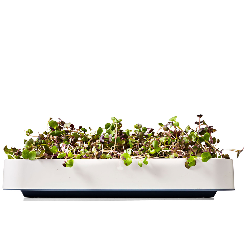 Chef'n microgreens grower