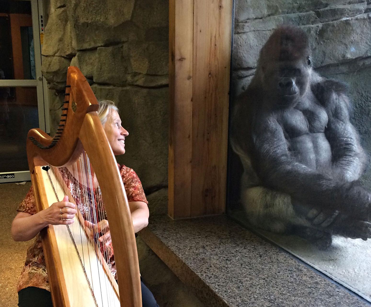 Terri Tacheny playing the harp for a goriilla