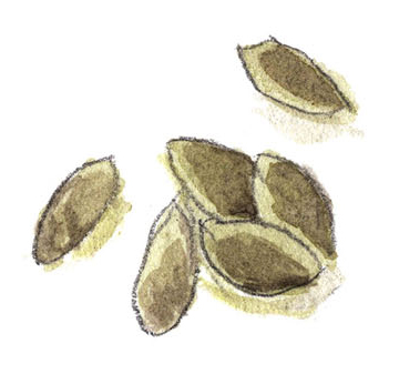 illustration of pile of nuts