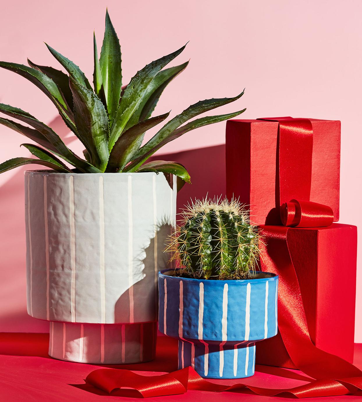 pinstripe planters