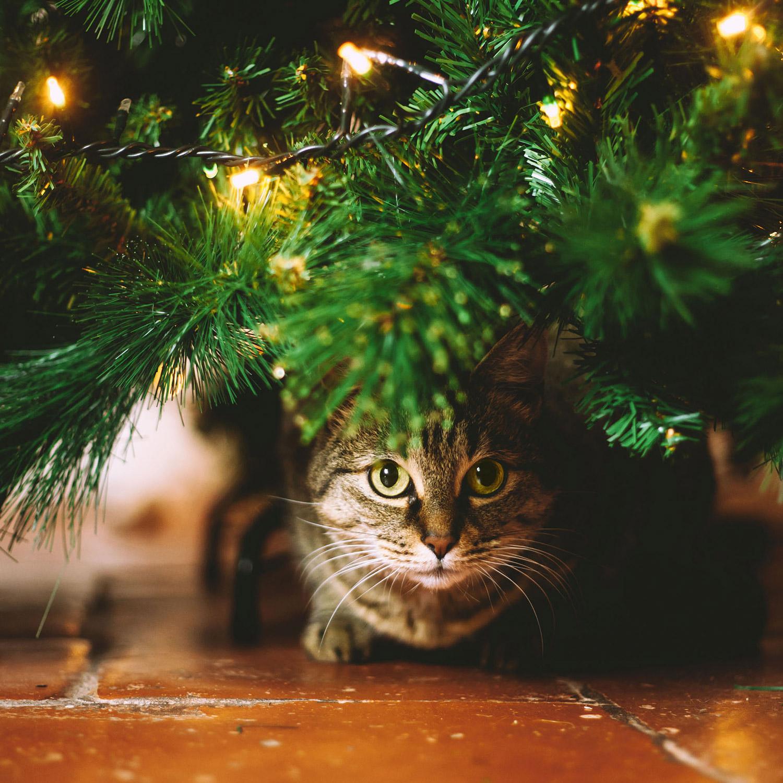cat peering from under Christmas tree