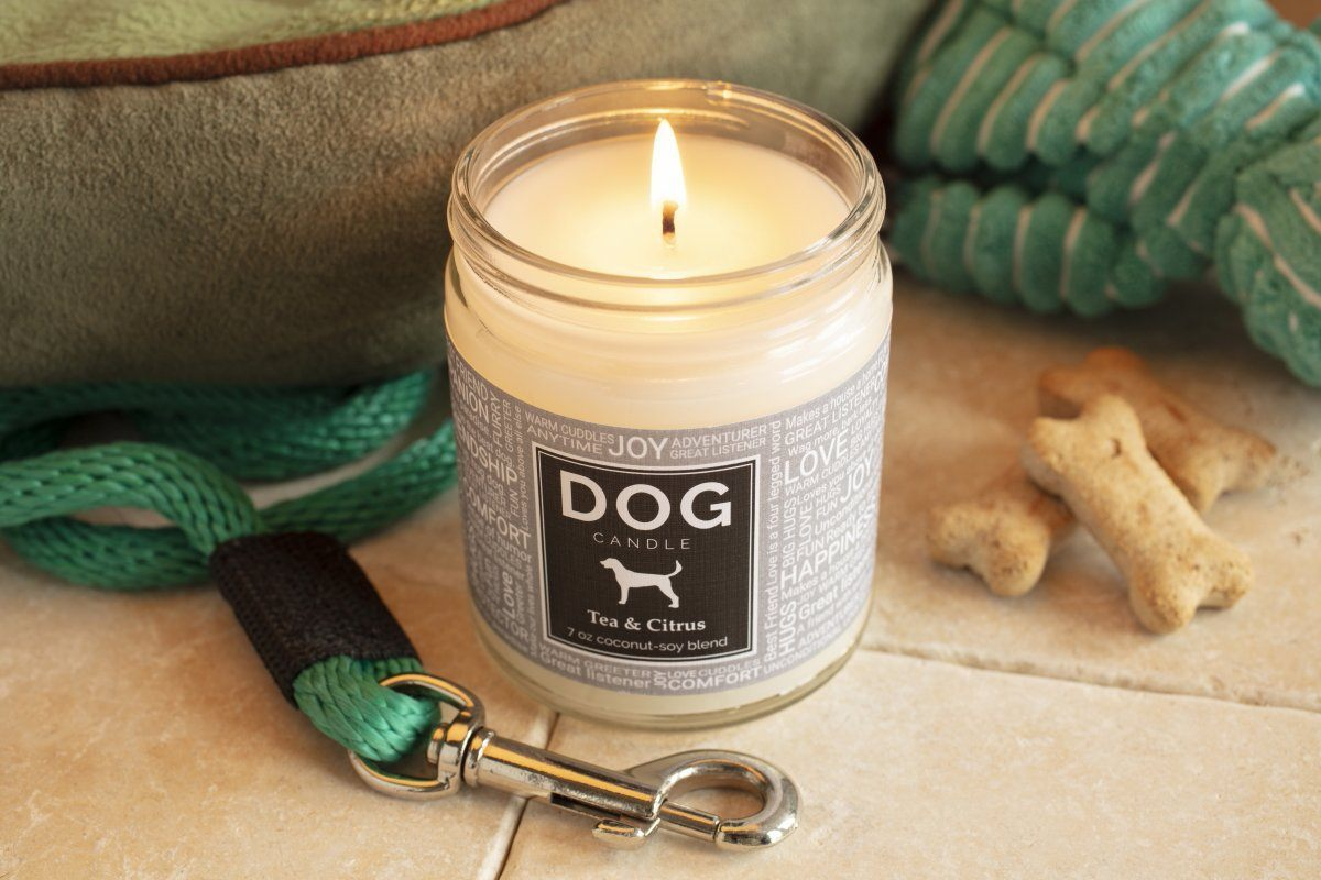 dog, puppy, candle, cozy, scented