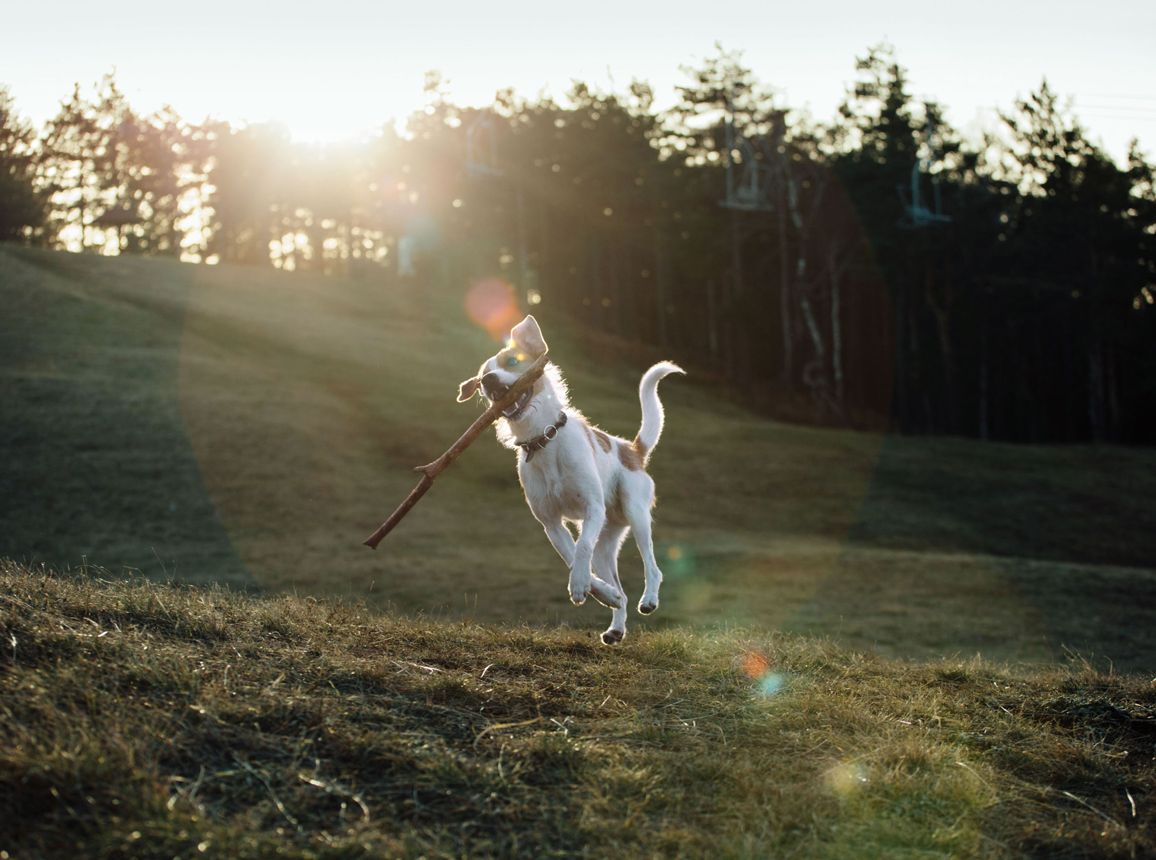 dog catching stick outside mid-air