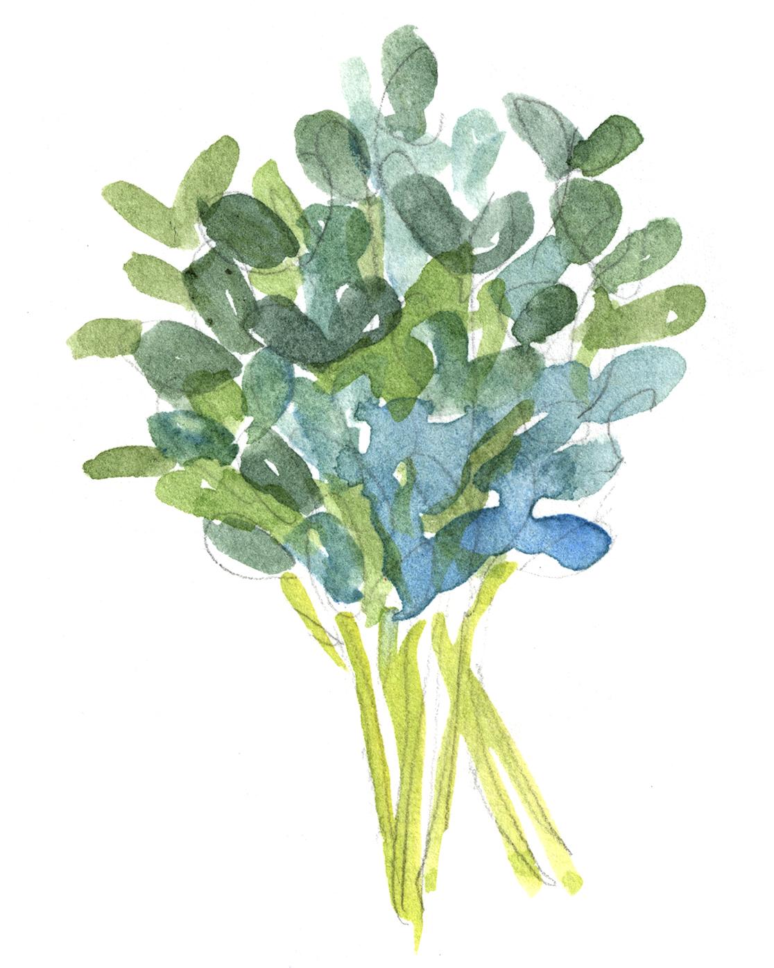 pea shoots illustration