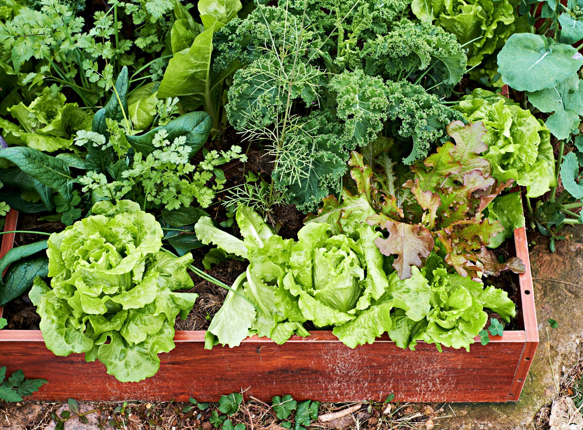 Raised garden vegetable bed