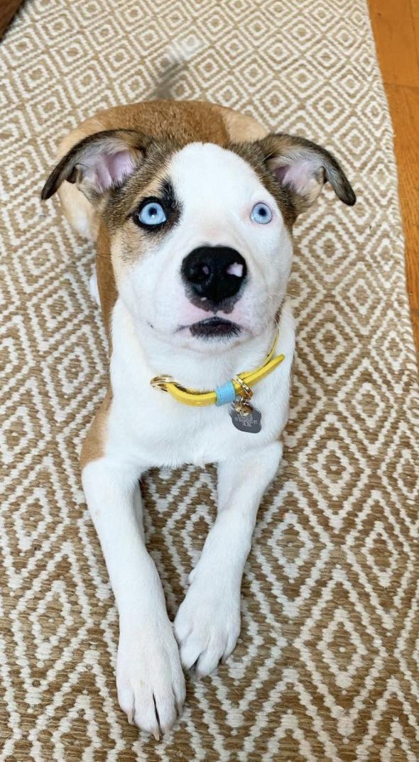 Puppy cute dog