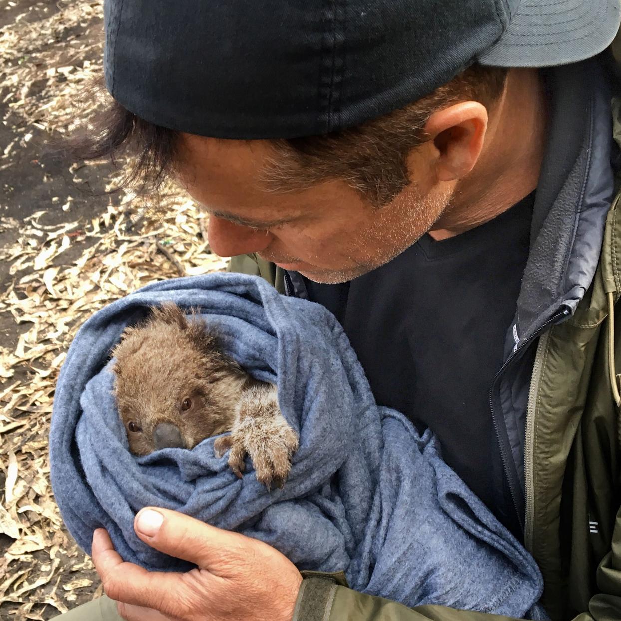 baby koala Douglas Thron
