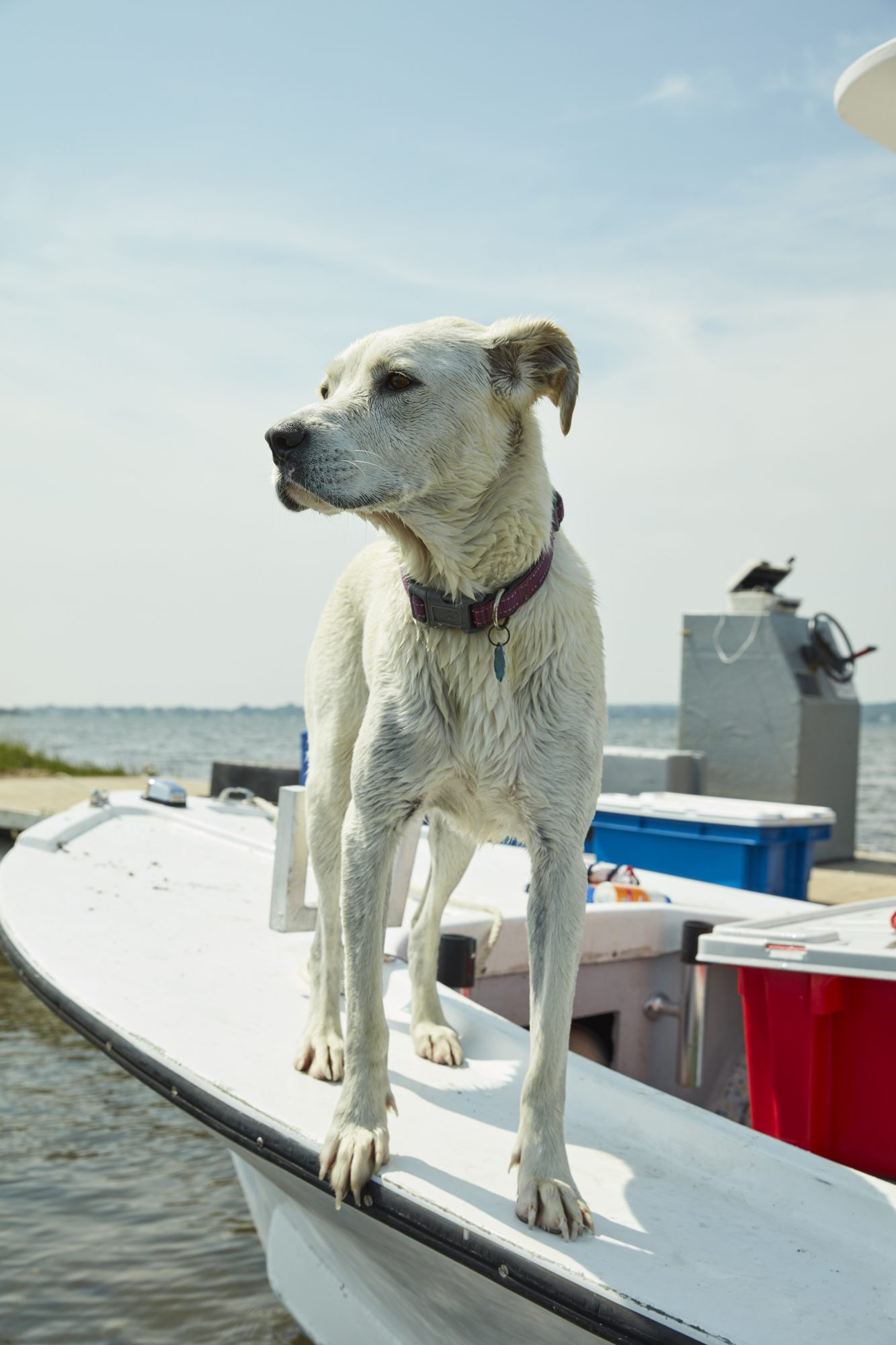 dog boat beach