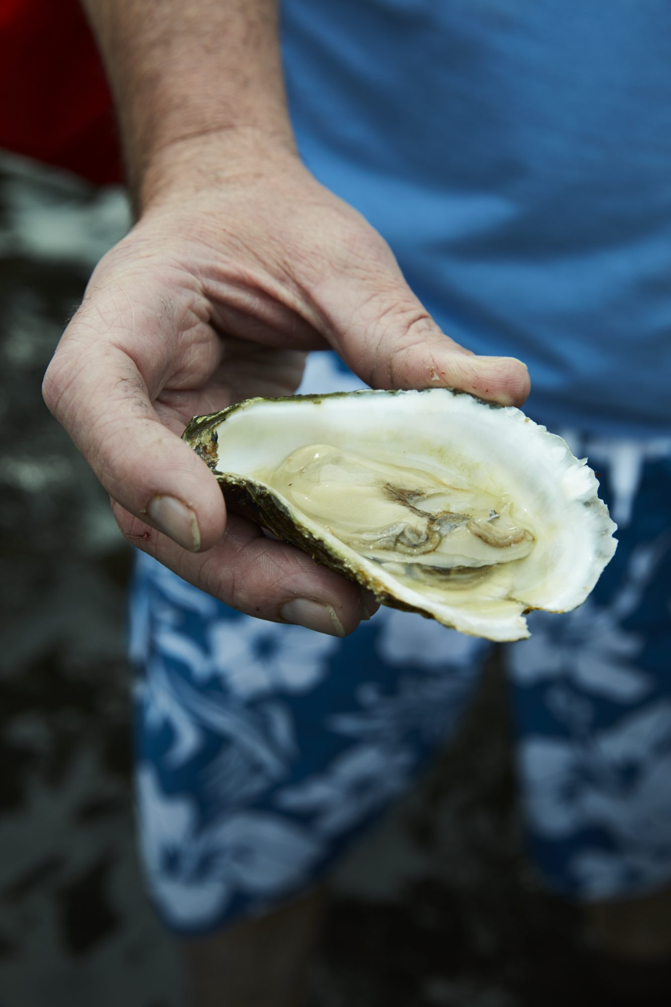 oyster hand