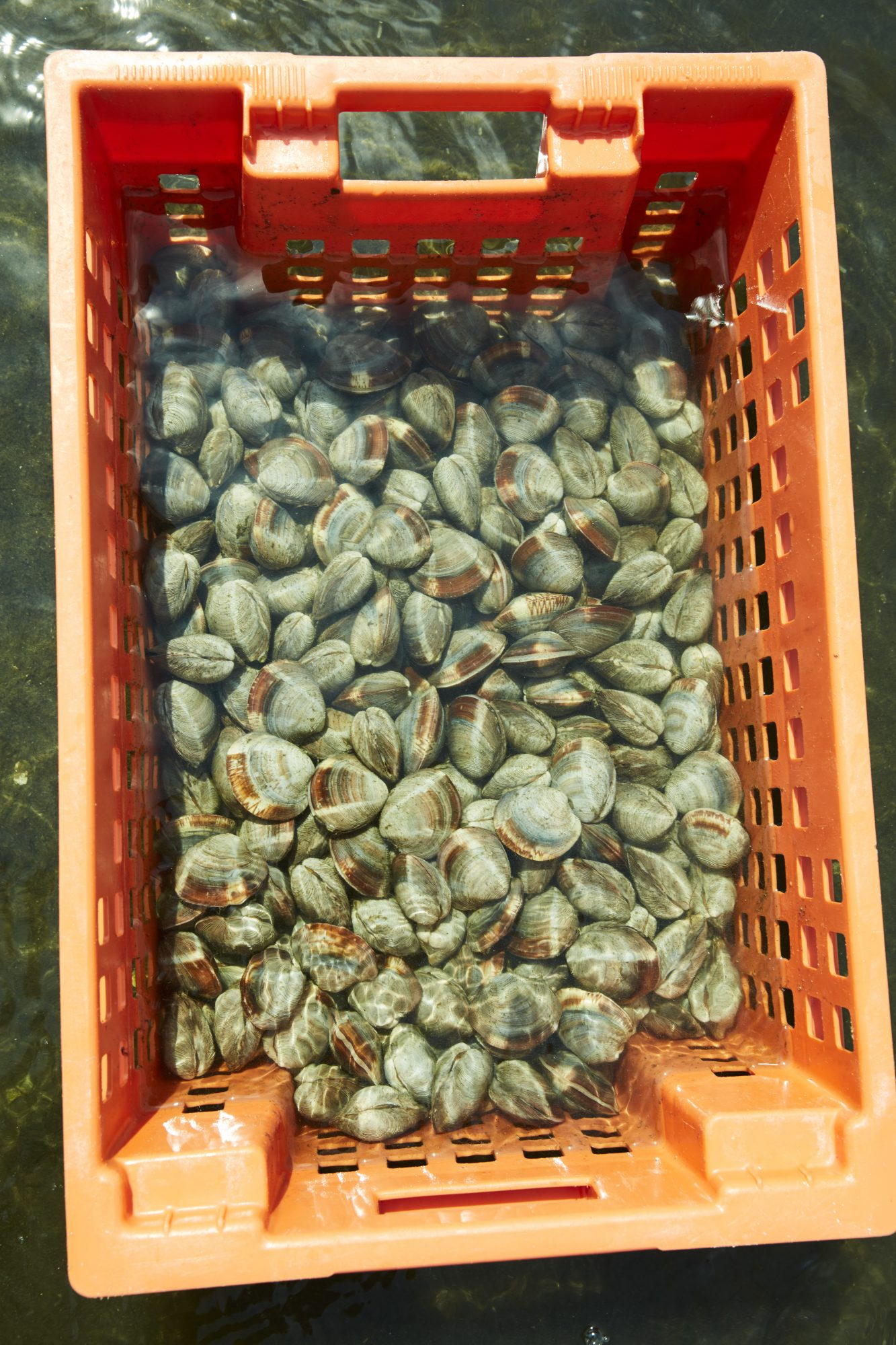 clams in basket